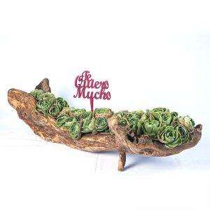 Jardinera de tronquito con plantas de suculentas