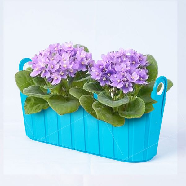 Jardinera con violetas africanas