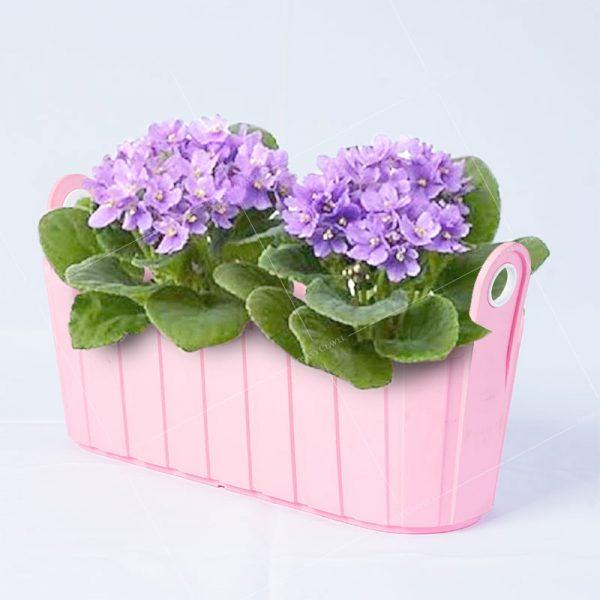 Jardinera con violetas africanas. Arreglos florales en Lima y Callao